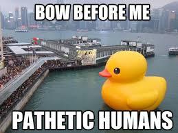 Funny Duck Meme - bow before me pathetic humans duck memes picsmine