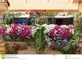 blumen fã r balkon typische terrasse balkon verzierte die rosa und roten blumen