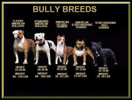 american pitbull terrier akc pinterest의 ban the deed not the breed 관련 상위 이미지 26개