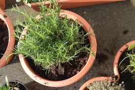 herbs u2013 the bunfight