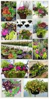 Garden Baskets Wall by Best 25 Ready Made Hanging Baskets Ideas On Pinterest Used