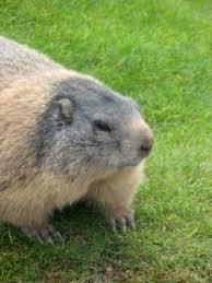 rid groundhogs
