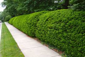 shrub trimming clean cut tree experts is one of the premier tree