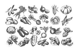 sketch vector vegetables bundle sale 50 by elena pimonova