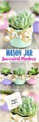 best 25 succulent gifts ideas on pinterest super happy face