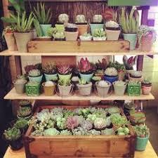 Cactus Garden Ideas Cactus Garden Ideas Home Design Ideas And Pictures