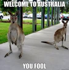 Australia Meme - 45 most funny kangaroo meme photos and images