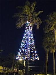 panoramio photo of palm tree christmas lights