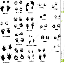 animal tracks download from over 39 million high quality stock