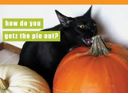 cat halloween picture showing media u0026 posts for funny halloween cats www picofunny com