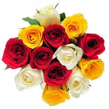 Colorful Roses Roses