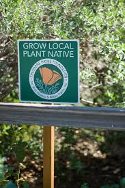 planting native species 14 best native garden inspiration images on pinterest native