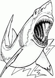 free printable shark coloring pages kids coloring