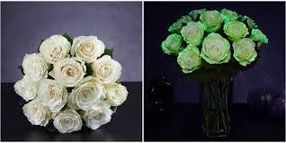halloween flowers gifts spooky glow in the dark roses now exist halloween flowers