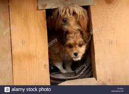 Small House Dogs Watch Dogs Stock Photos U0026 Watch Dogs Stock Images Alamy