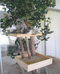 Cat Treehouse Una Casa Sull U0027albero Purrfect Home Una Casa A Misura Di Gatto