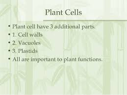 which plant cell organelle uses light energy to produce sugar cell organelle notes