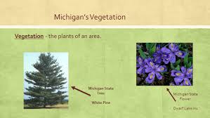 Michigan vegetaion images Lesson 4 michigan 39 s vegetation i can identify and describe the jpg