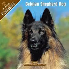 belgian shepherd temperament belgian shepherd calendar dog calendars calendar toy action