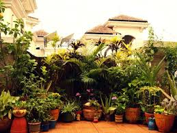 fascinating indian balcony garden decoration ideas home decoration