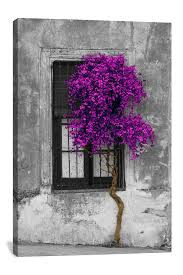 tree in front of window purple pop color pop by panoramic images