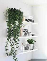 home interior plants best 25 indoor plant decor ideas on plant decor