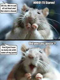 Mouse Memes - 53 best ratz mice images on pinterest computer mouse mice and