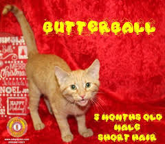 butterball applications butterball s web page
