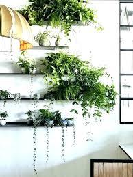 decorative indoor plants bathroom identifying house plants best indoor plants indoor plant