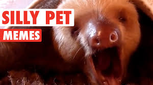 Meme Video Clips - silly pet meme video compilation 2016 youtube