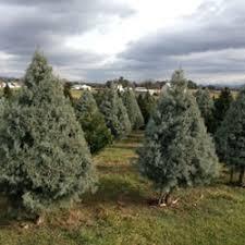 Christmas Tree Farm Va - mountain view christmas tree farm christmas trees 2155