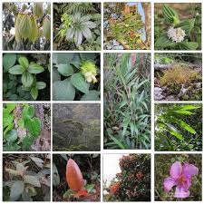 native plants in india work ian lockwood page 3