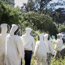 corporate beekeeping u2014 planet bee foundation