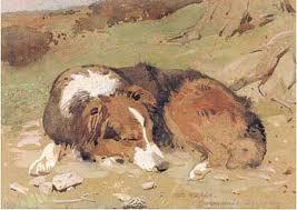 australian shepherd female names bc museum bc names