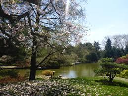 fort pond native plants 2015 05 03 brooklyn botanic garden part i live learn dream do
