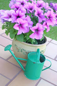 flower gardening in your balcony a guide ohmyapartment