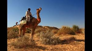 thar desert animals explore the thar desert youtube
