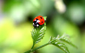 cute ladybug wallpaper hdq beautiful ladybug images u0026 wallpapers