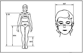 anthropometry and biomechanics