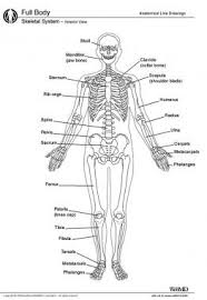 osteology bone anatomy overview gross anatomy overview gross