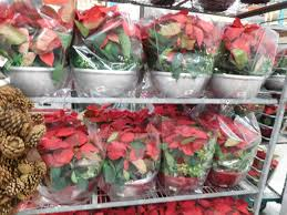 the home depot black friday the home depot black friday u0027s poinsettia prices ship saves
