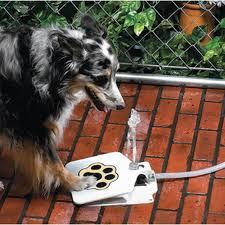 australian shepherd ipod 5 case imountek ultra hygienic dog fountain pet water fountain with 41