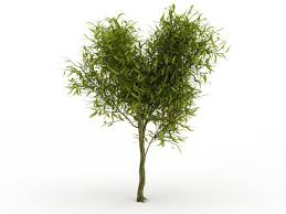 small willow tree 3d model 3ds max files free modeling