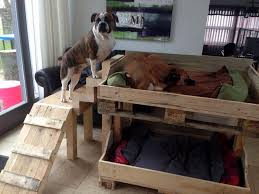 Bunk Bed For Dogs 21 Creative Beds Ideas To Get Inspired