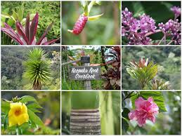 garden of eden flower shop road to hana stops 14 best places to stop in maui