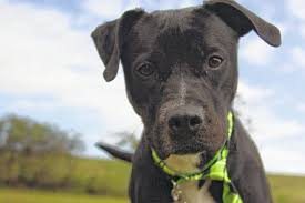 humane society black friday special deal on black dogs at humane society in bucyrus galion