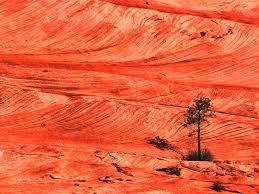 stone desert image red stone desert jpg prydain wiki fandom powered by wikia