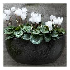 Wall Mounted Planters by Black Garden Wall Pyihome Com