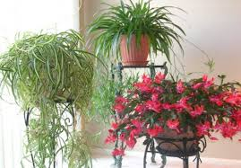 Plants To Keep In Bathroom Bringing Houseplants In For The Winter 10 Tips For Preparing