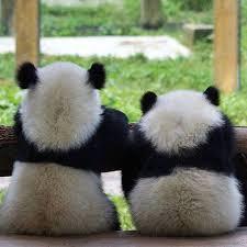 Sad Panda Meme - best 22 sad panda meme wallpaper site wallpaper site